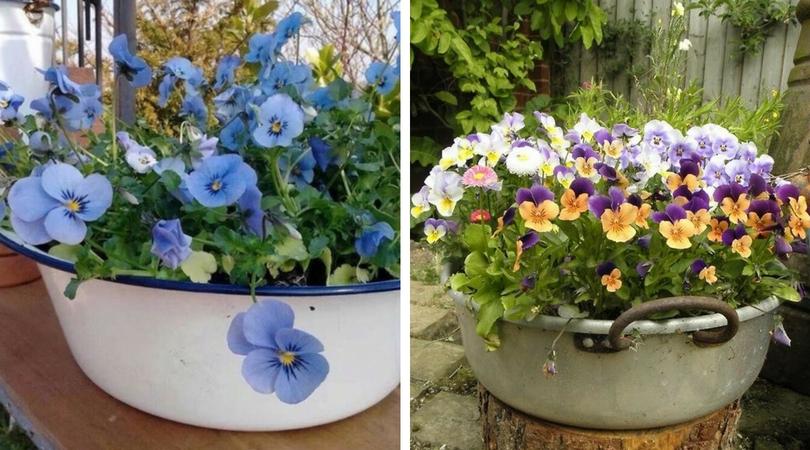 Цветы в старой миске