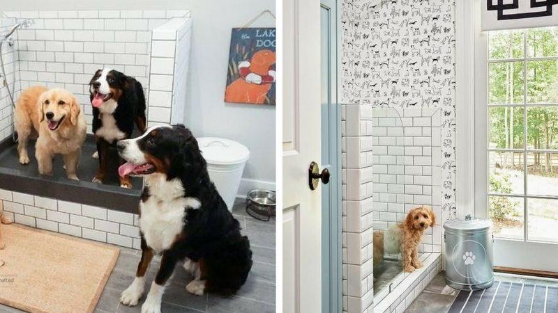душ для собак