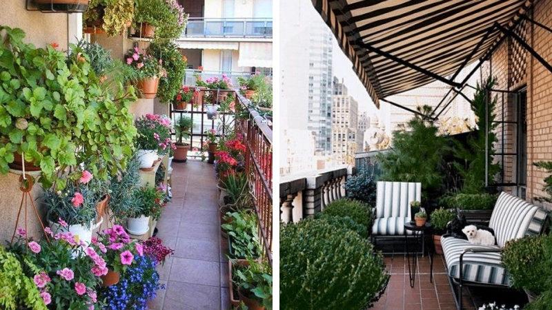 Сад нам балконе