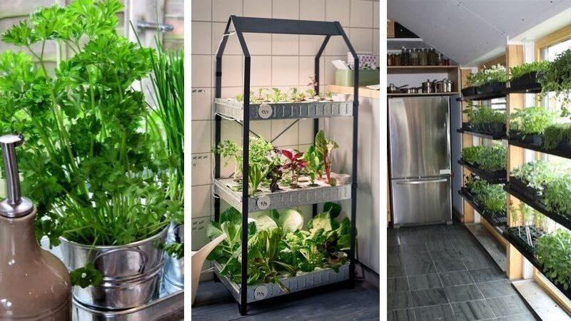 огород на кухне