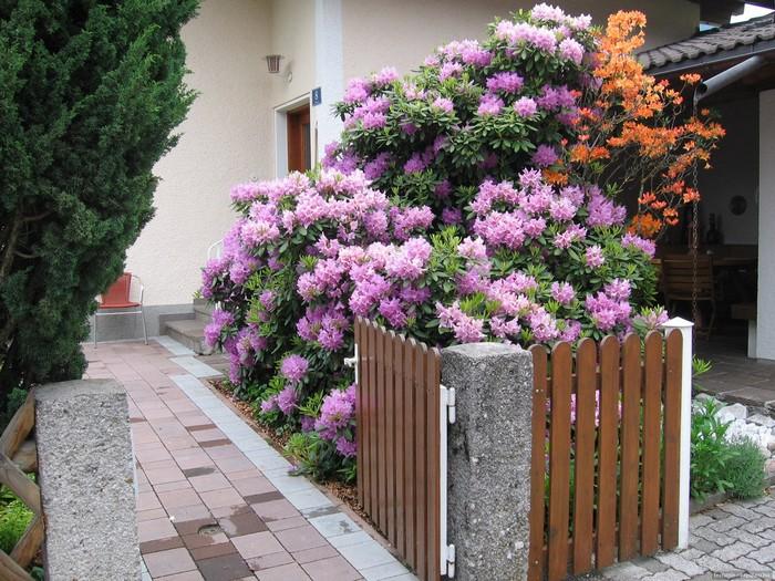 дизайн участка возле дома