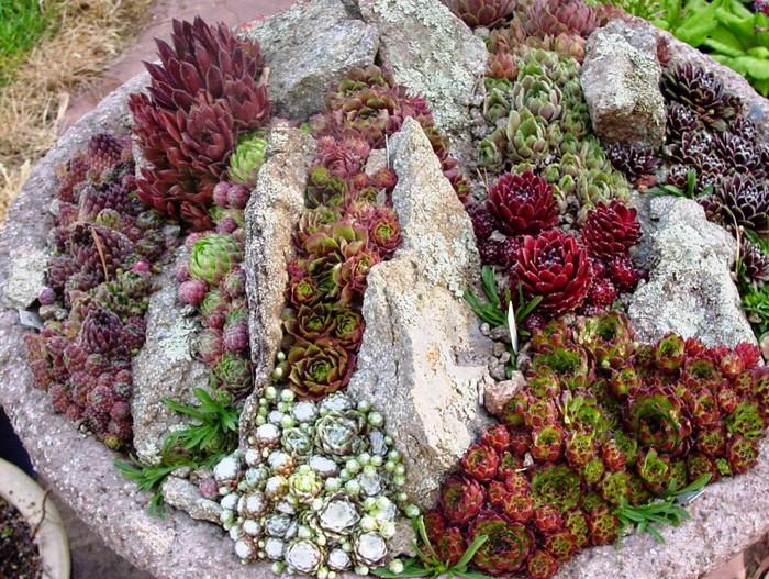 клумба с камнями