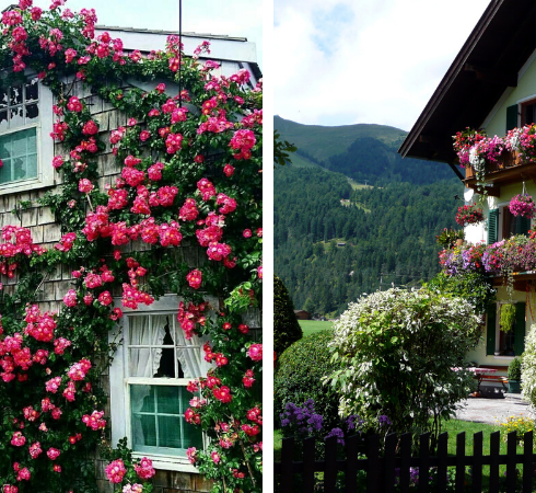 загородный дом в цветах
