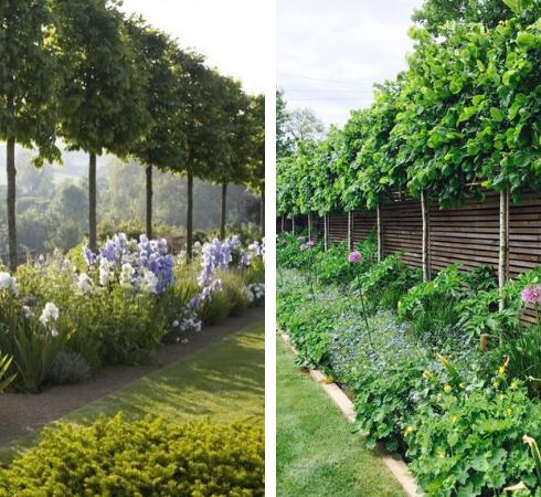 декоративные деревья для маленького сада