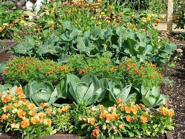 Дизайн клумб из овощей