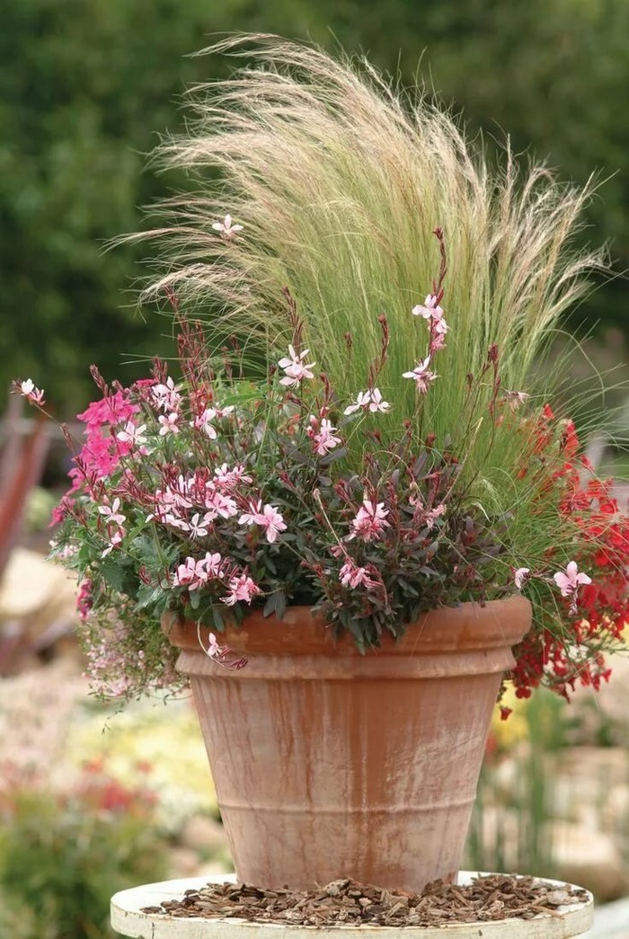 декоративная трава