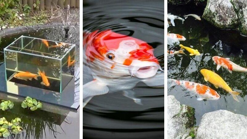пруд на даче для рыбы