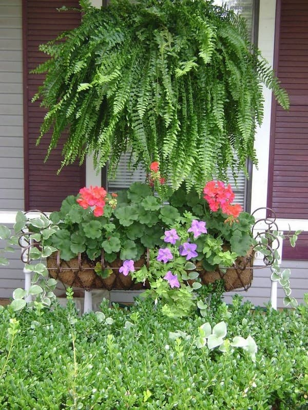 садовый папоротник