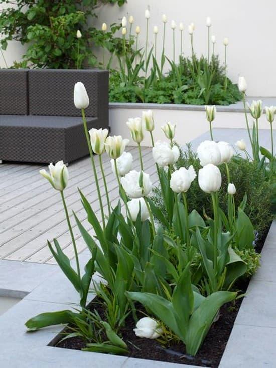 интерьер двора